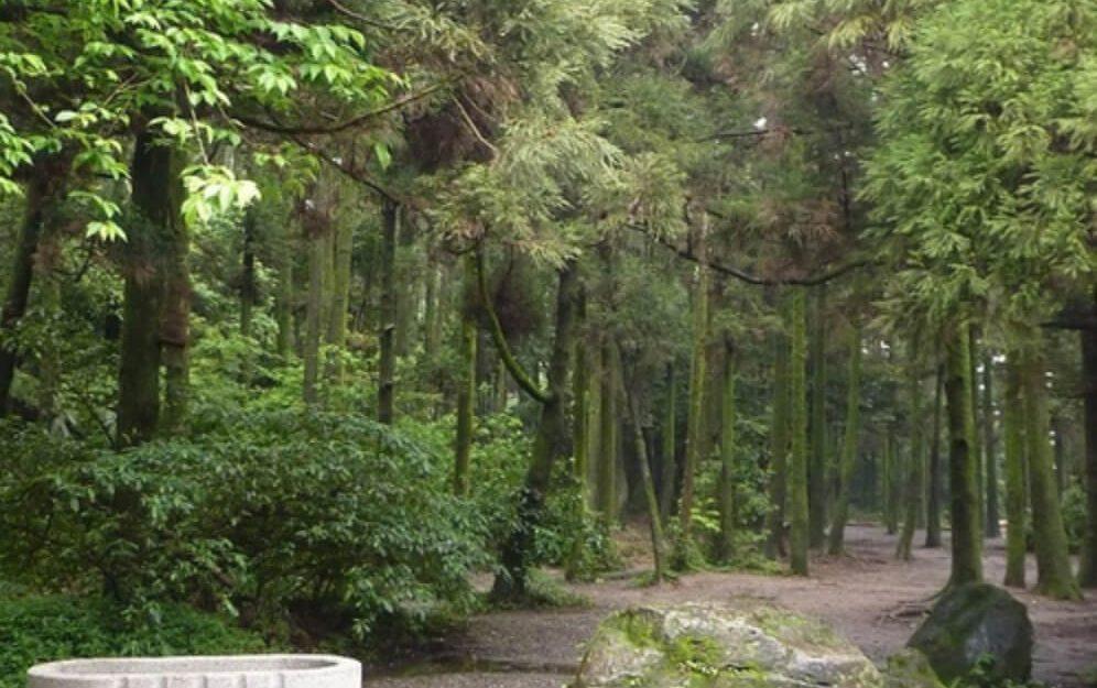 竹子湖黑森林-北部山湖花海推薦